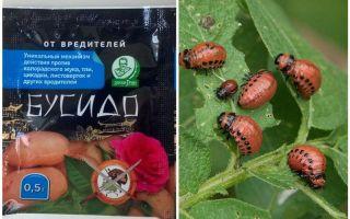 Rimedio per lo scarabeo di patate Bushido Colorado: istruzioni per l'uso, l'efficacia, recensioni