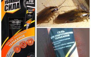Rimedio Forza dannosa per gli scarafaggi