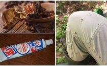 Rimedi popolari per le zanzare