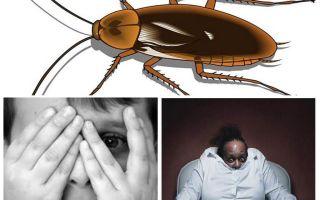 Perché la gente ha paura degli scarafaggi