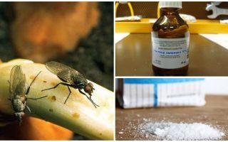 Come sbarazzarsi delle mosche della cipolla
