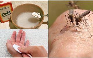 La zanzara morde la soluzione di soda per bambini e adulti