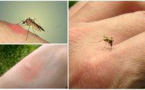 Perché le zanzare mordono alcune persone più di altre