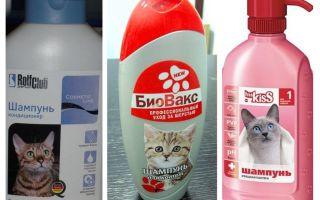 Shampoo pulci per gattini e gatti