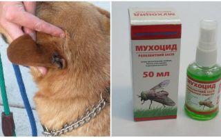 Come e cosa trattare le orecchie di un cane dalle mosche