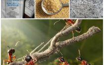 Combattere le formiche nei rimedi popolari del giardino