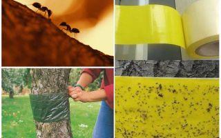 Come affrontare le formiche sugli alberi del giardino