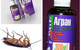 Rimedio Agran per scarafaggi
