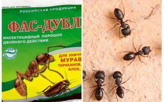 Significa Fas-Double dalle formiche