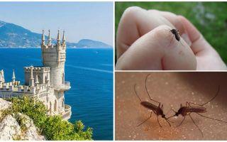 Ci sono zanzare in Crimea