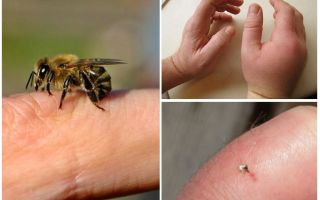 Cos'è utile la puntura d'ape per una persona?