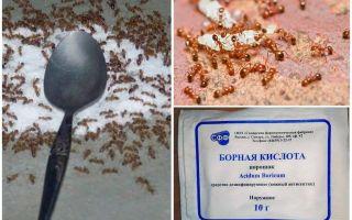 Come comportarsi con le formiche rosse