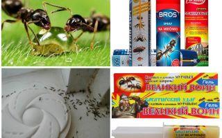 Come distruggere formiche e formicaio