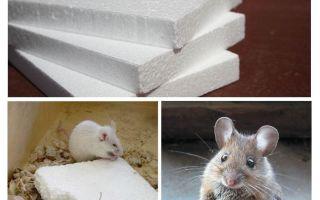 I topi rosicchiano la schiuma