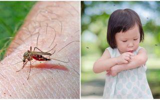 Quanti giorni fa la puntura di zanzara?