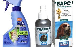 Il miglior spray per cani per cani