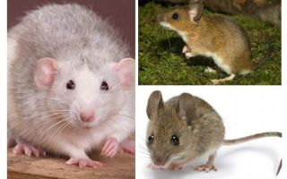 Struttura del mouse