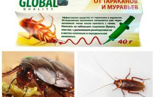 Blatta rimedio globale (globale)