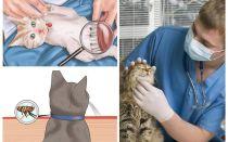 Come sbarazzarsi di pulci in un gatto o un gatto a casa