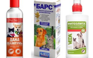 Lo shampoo per pulci più popolare ed efficace per cani