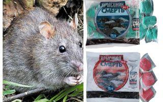 Morte di ratto velenoso