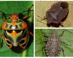 Come sono gli insetti nella foto