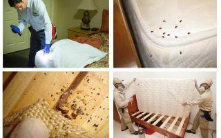 Dove sono nascosti gli insetti nell'appartamento