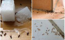 Come sbarazzarsi di formiche in una casa privata rimedi popolari