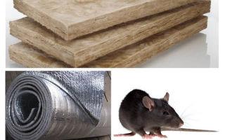 Che tipo di isolamento non mangiano ratti e topi