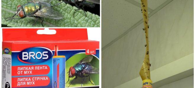 Negozio e rimedi popolari per le mosche