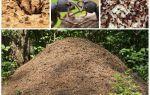 La vita delle formiche in un formicaio