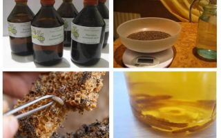 Indicazioni e controindicazioni di falena di cera di tintura