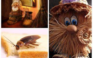 Cospirazione - come sbarazzarsi degli scarafaggi in un appartamento una volta per tutte