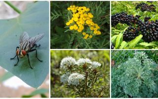Che odore hanno paura di mosche e zanzare