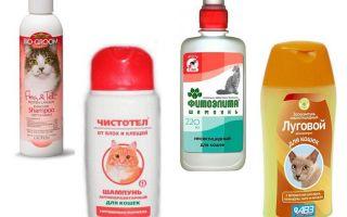 I migliori shampoo pulci