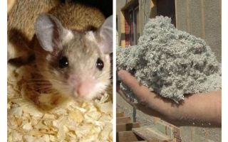 Che tipo di isolamento non mangiare topi