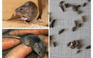 Come trattare con i topi in una casa privata