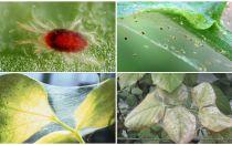 Come sbarazzarsi degli acari: droghe e metodi di lotta