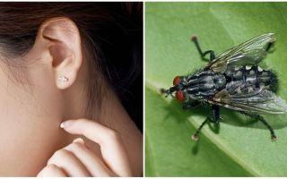 Come ottenere una mosca dal tuo orecchio a casa