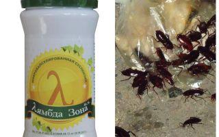 Sonda lambda Rimedio per gli scarafaggi