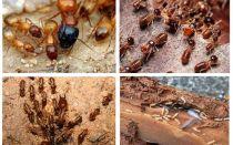 Chi sono le termiti