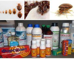 Revisione dei rimedi più efficaci per gli insetti domestici