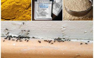Fondi di formiche nella casa del paese