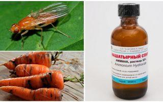 Combatti contro la mosca delle carote con ammoniaca