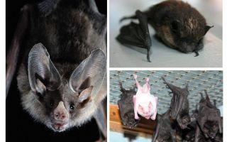 Come sbarazzarsi dei pipistrelli in casa