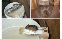 Come fare una trappola per topi con le tue mani