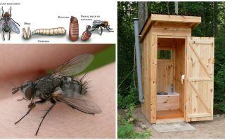 Come sbarazzarsi delle mosche nella toilette sulla strada