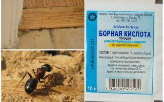 Come rimuovere le formiche da una casa di legno
