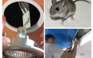 Come sbarazzarsi dei topi nel soffitto teso