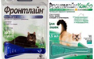 Gocce di pulce di prima linea per gatti